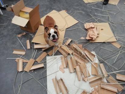 Boo et ses cartons