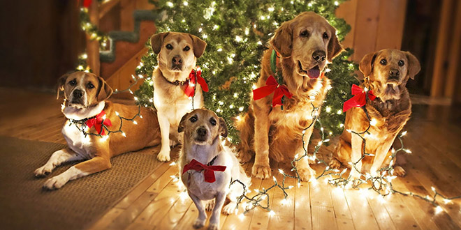 chiens-sapins-noel-decoration