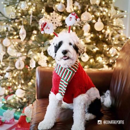 holiday_scarf_-_lunatheportie.jpg