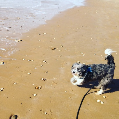 Kangourou des plages