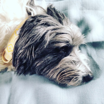 See scout sleep