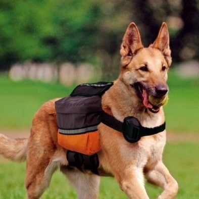 sac-a-dos-pour-chien-dog-scout.jpg