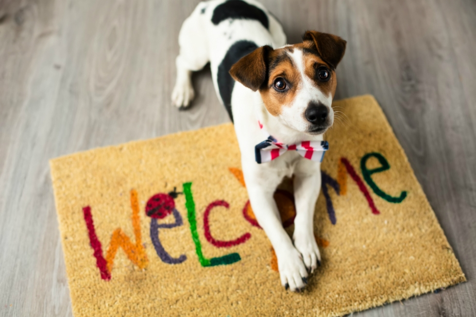 welcome-dog
