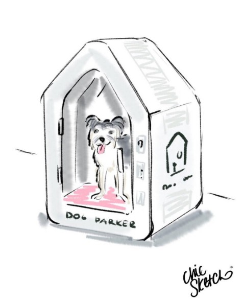 dogparker1.jpg