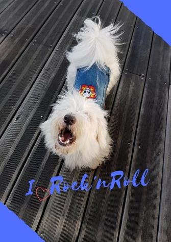Belle et rebelle ! (1).jpg