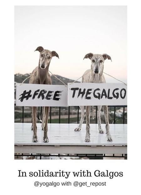 FreeGalgos.jpg