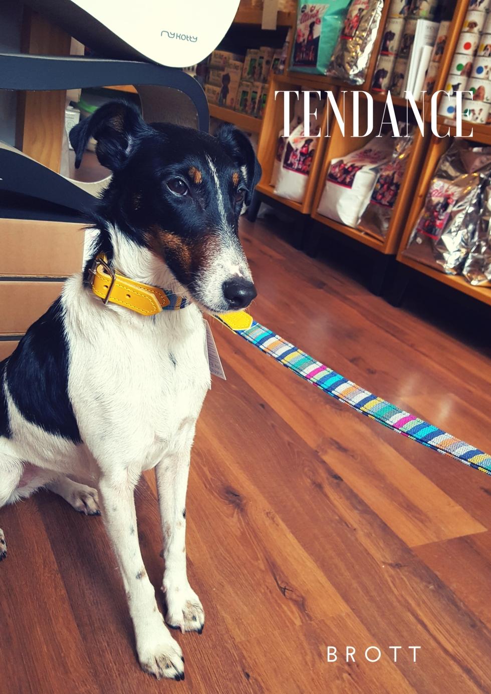 Profession- Dogmodel (1)