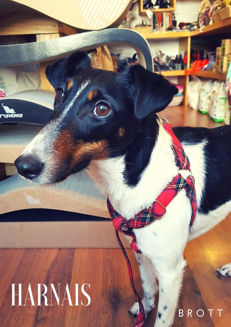 Profession- Dogmodel (2)