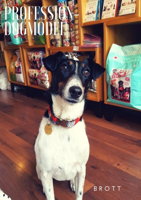 Profession- Dogmodel