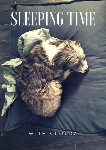 SLEEping time.jpg