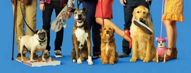 Dogdays (5)