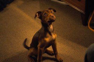A Dog's Way Home https://workspace.cimediacloud.com/mediaboxes/671f4f23db024652ba7f2ad4b2d58c46